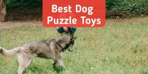 5 Best Interactive Dog Puzzle Toys