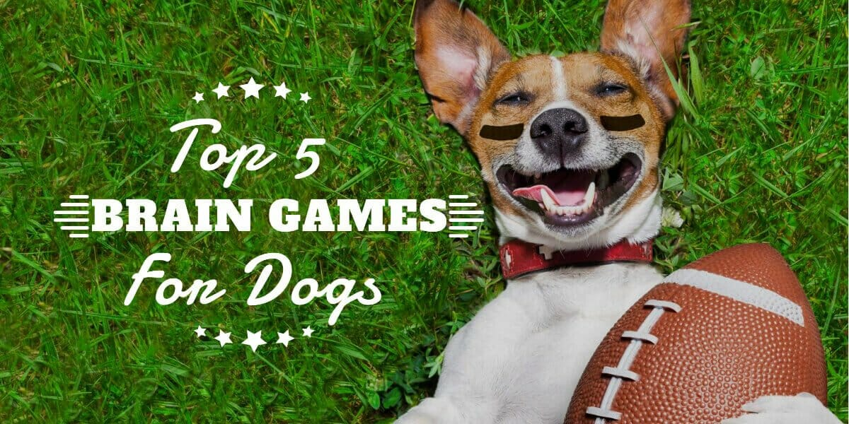 Best Brain Games for Dogs 5