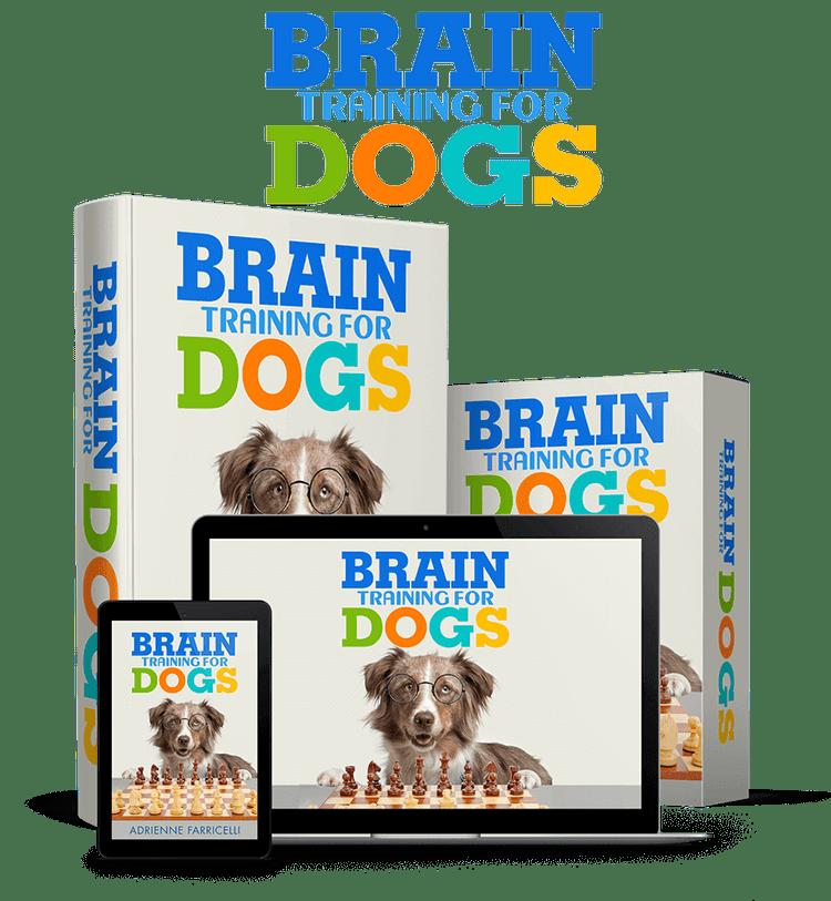 brain training for dogs program